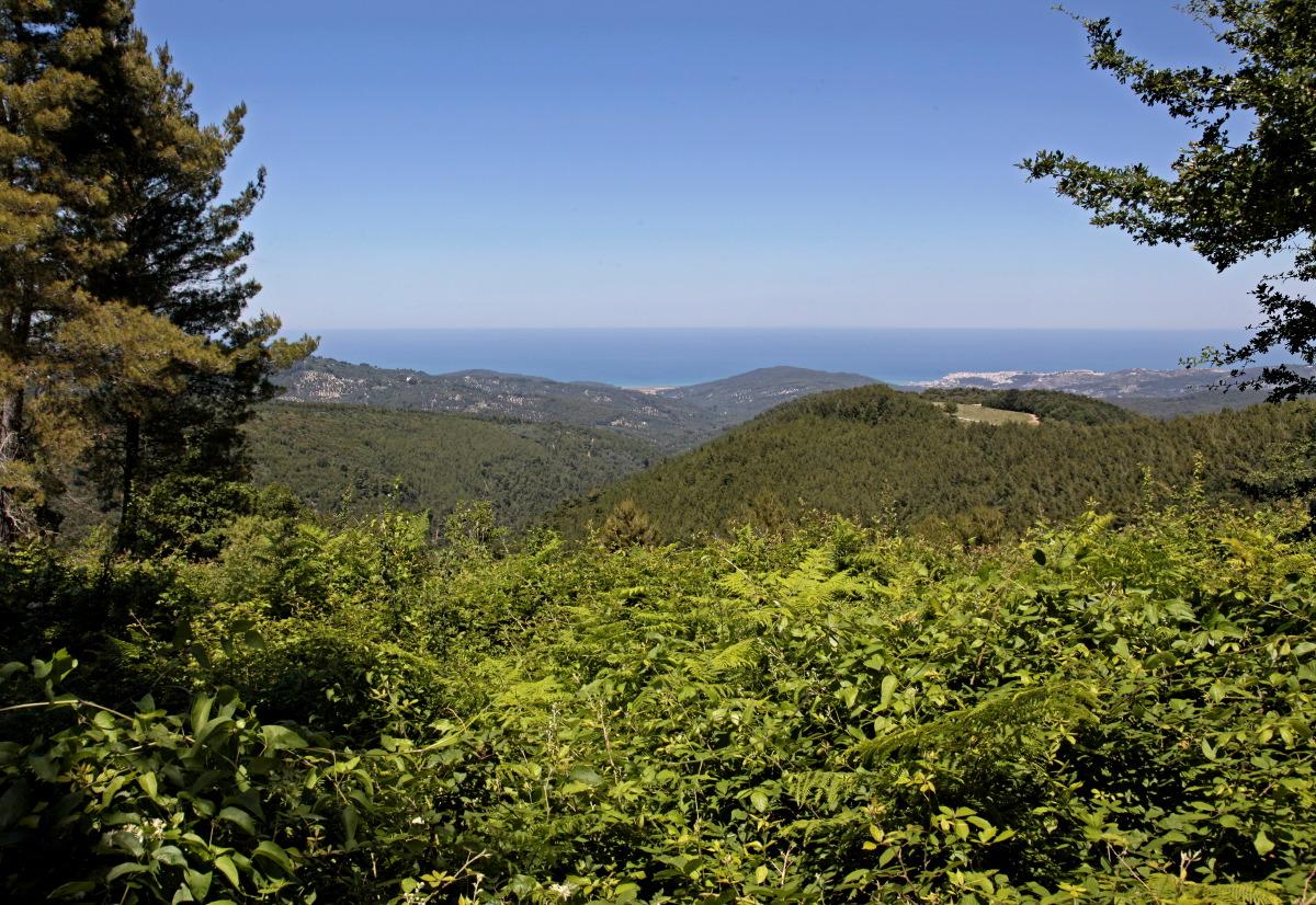 Foresta Umbra, le poumon vert du Gargano