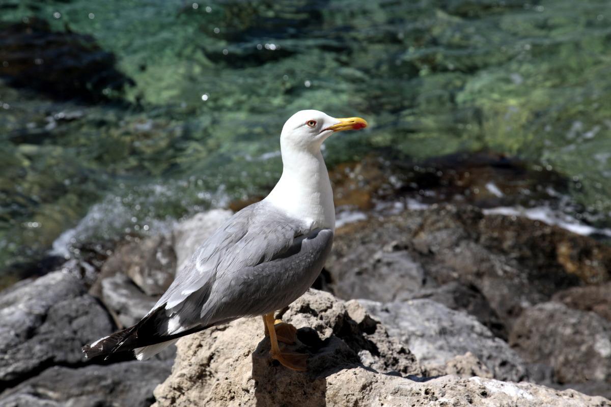 Cher habitant des îles Tremiti