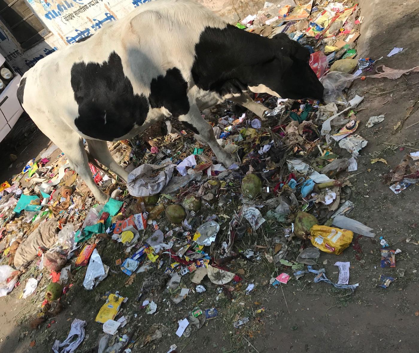 Jaipur (17 au 19 novembre)_17.JPG