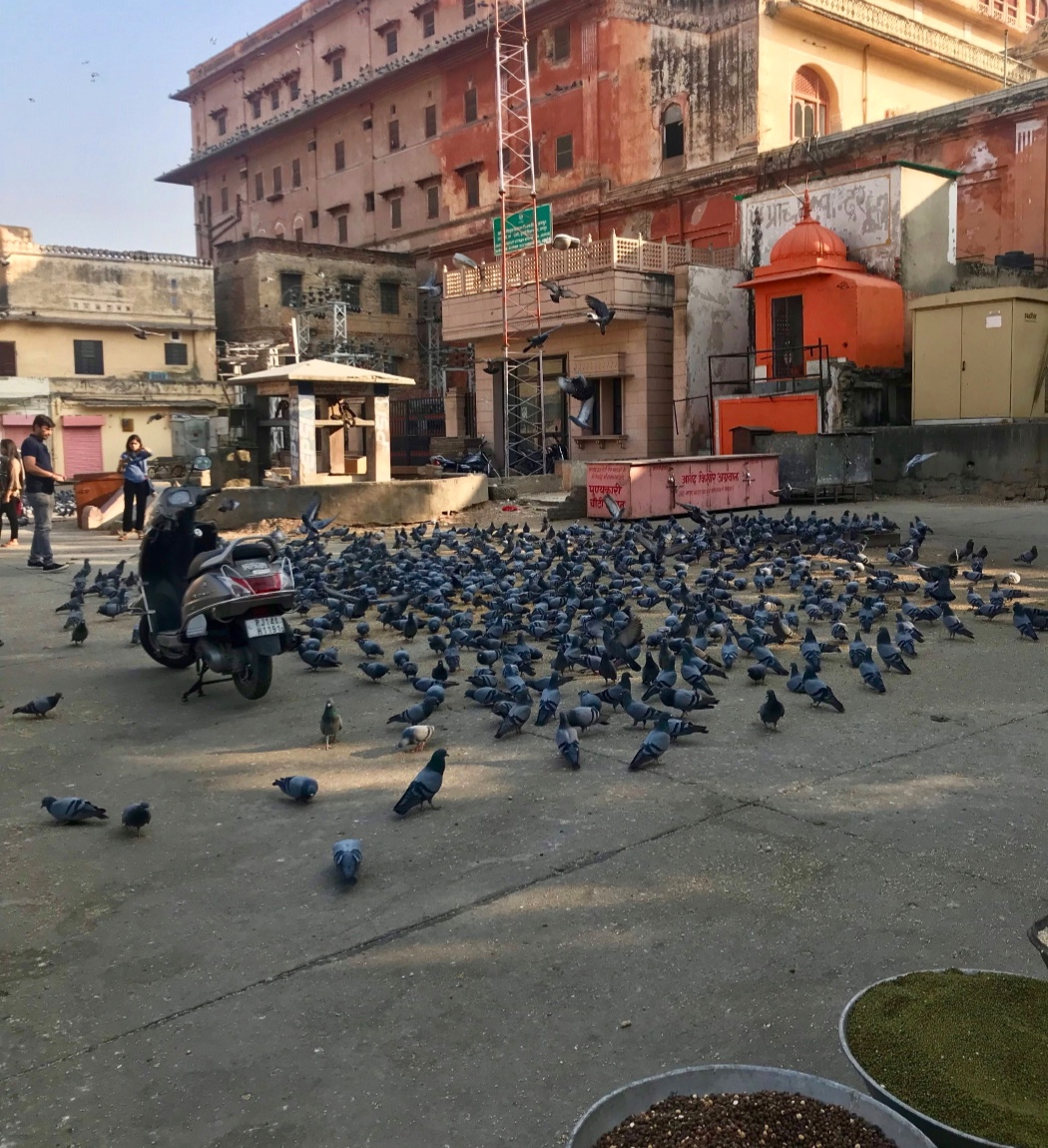 Jaipur (17 au 19 novembre).JPG
