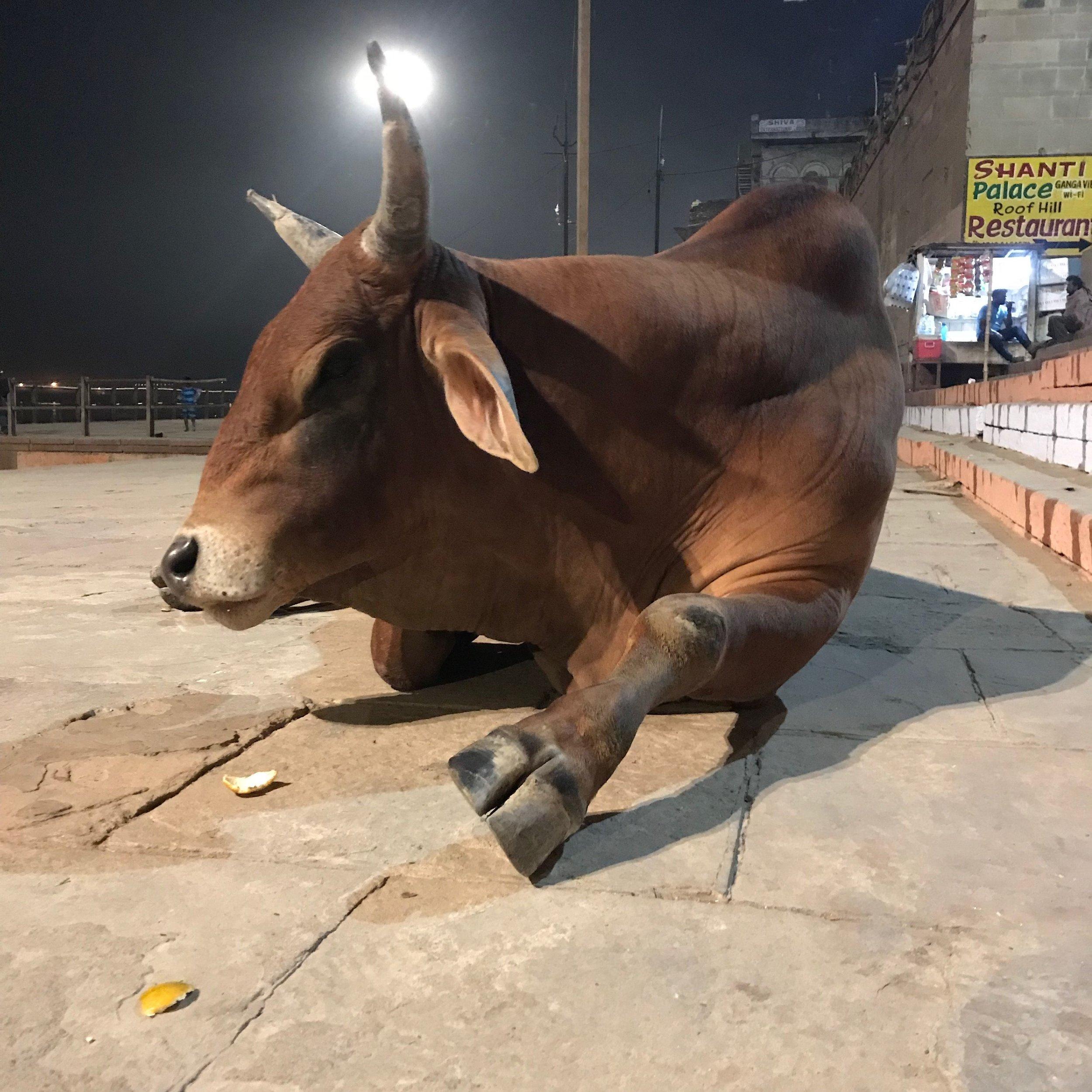 Varanasi (1er au 8 décembre)_15.jpg