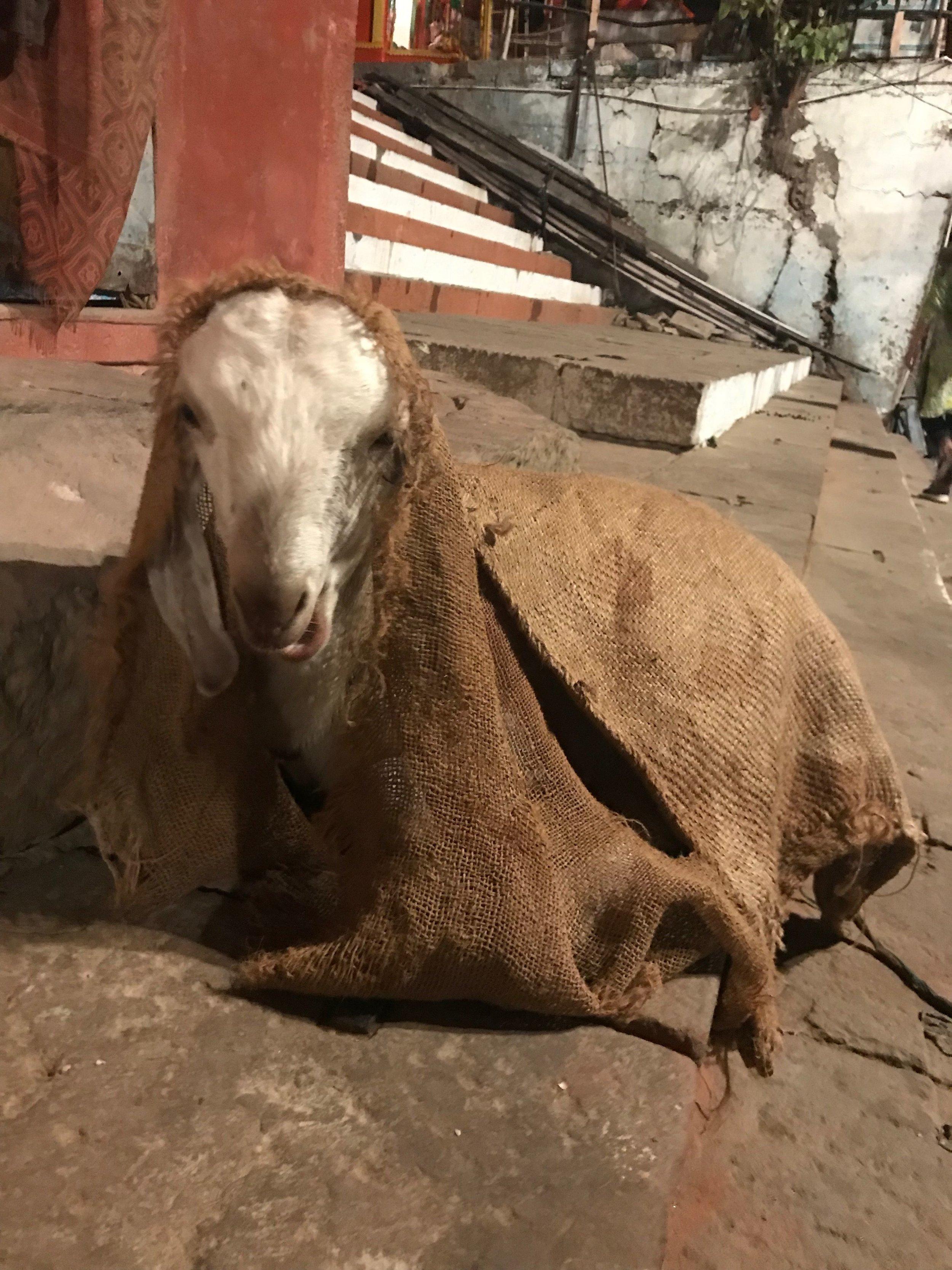 Varanasi (1er au 8 décembre)_24.jpg