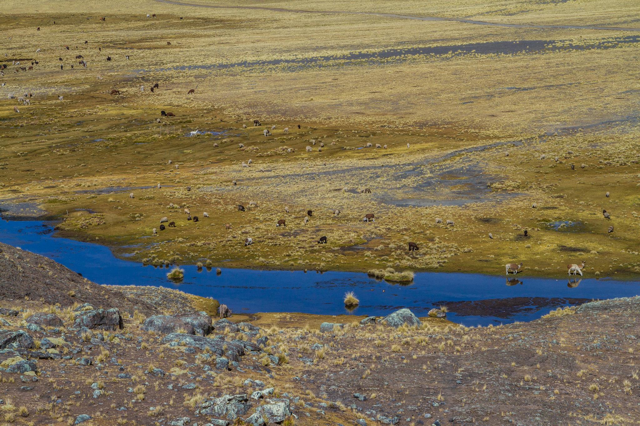 Ali-Barqawi-Studios-Explore-Series-Travel-Adventure-Documentary-C4CGAZA-Bolivia-Mount-Tarija-2015-246.jpg