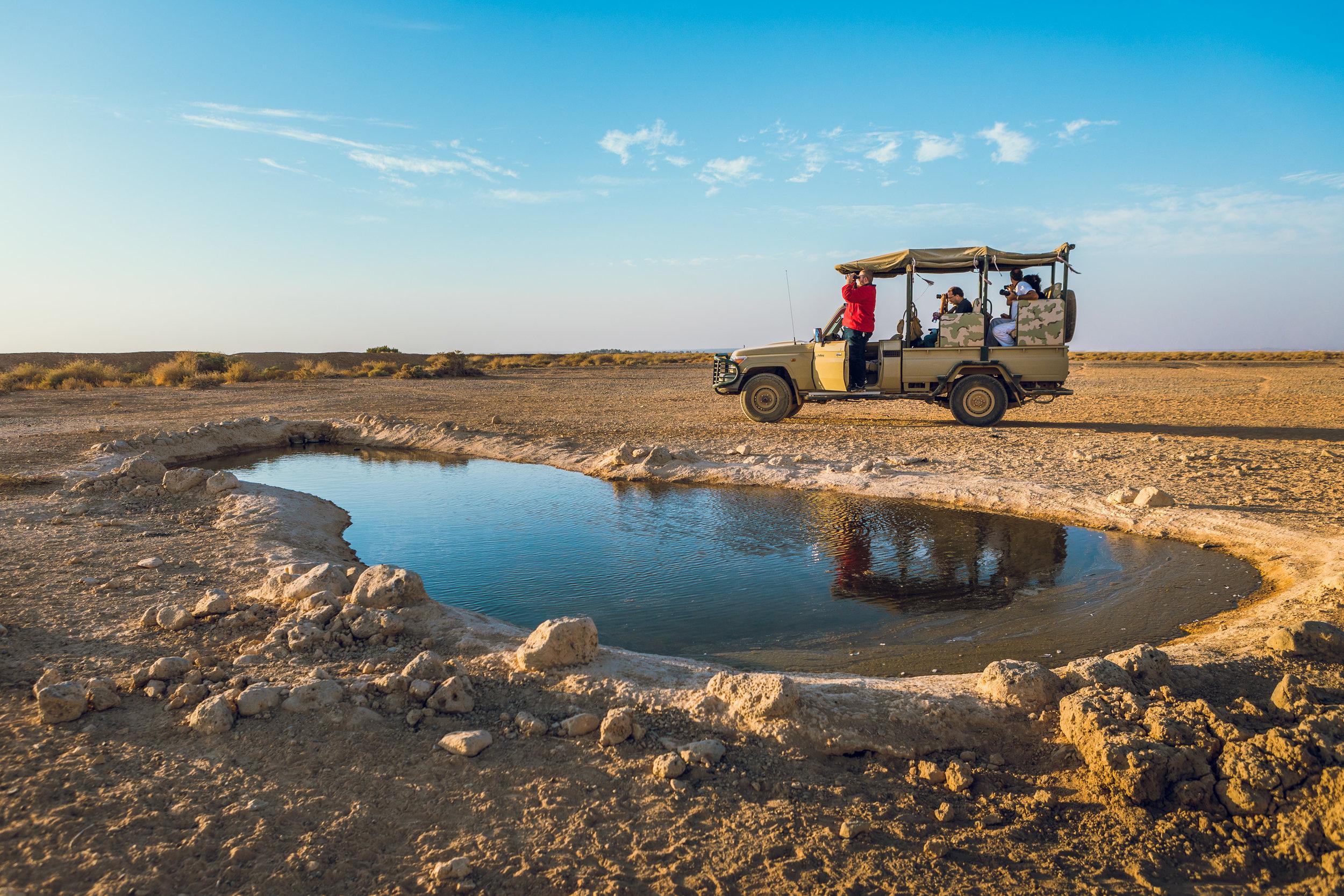 Ali-Barqawi-Studios-Adventure-Travel-Shaumari-Wildlife-Reserve-R