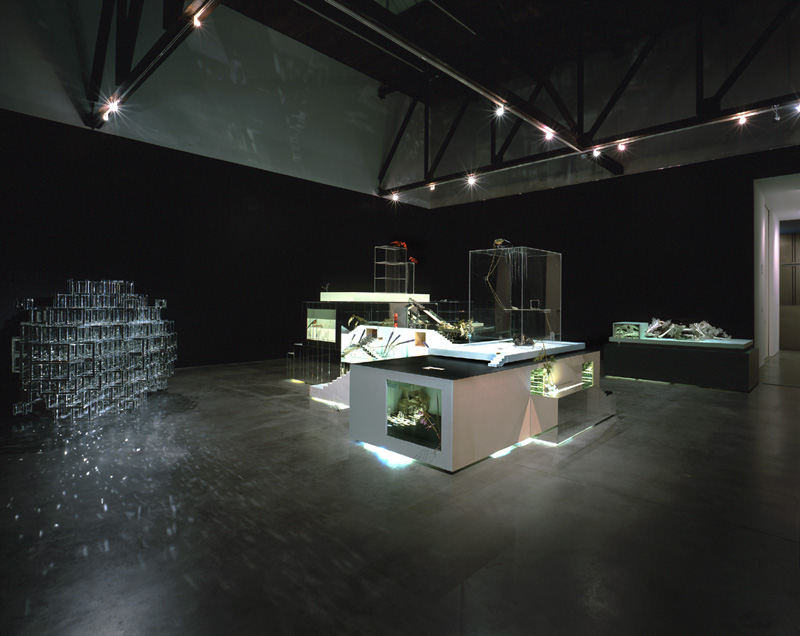 2004 Installation View.p.jpg