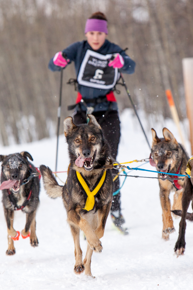 """Katherine Sheepway competing in the Cool Dogs - Hot Springs race at Takini Hot Springs today with what we affectionately refer to as """"our dogs"""" although we've only known them for about a week."""
