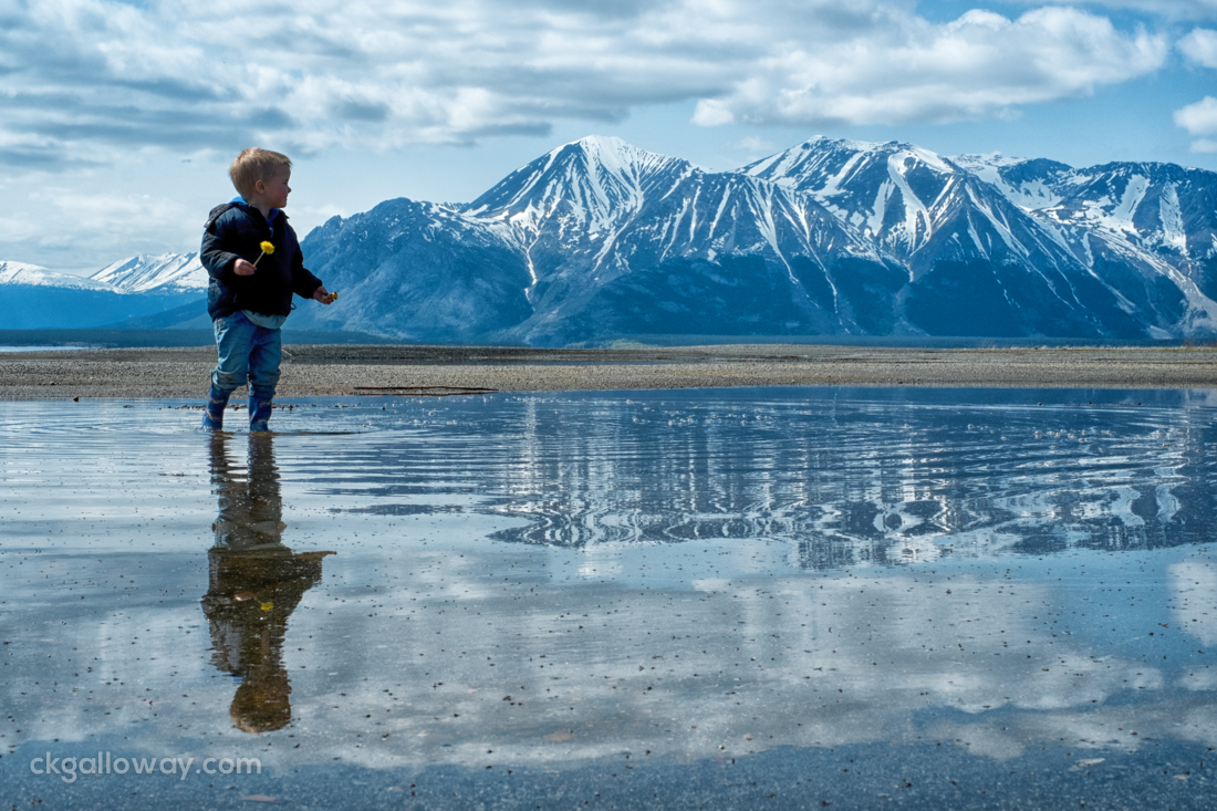 Oscar exploring the beach at Atlin Lake.  Photo by Christa Galloway.
