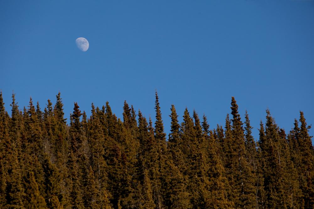 ckgalloway-grey-mountain-5480.jpg