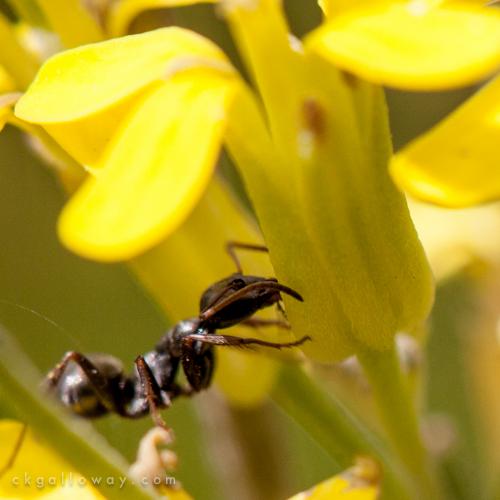 ckgalloway-macro-flora-yukon-6667.jpg