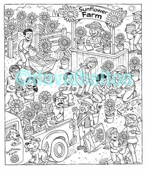 Sunflower Farm.jpg