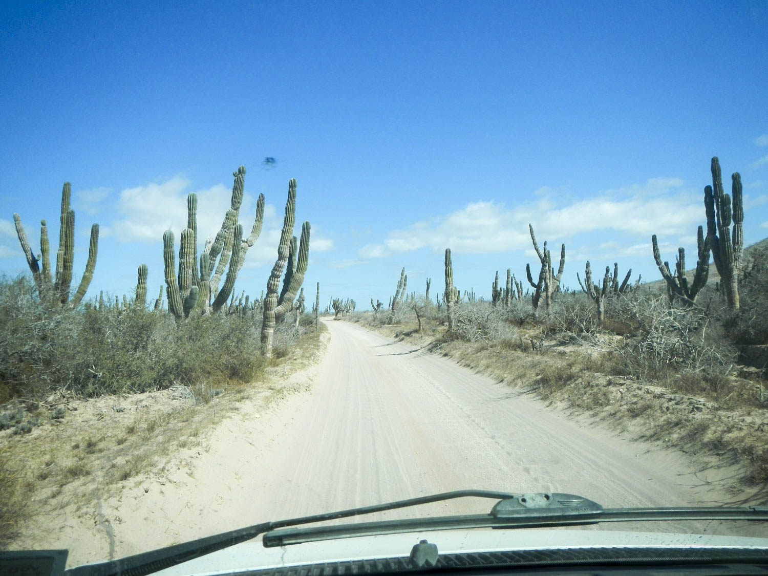Baja California, desolate roads forever. Mexico