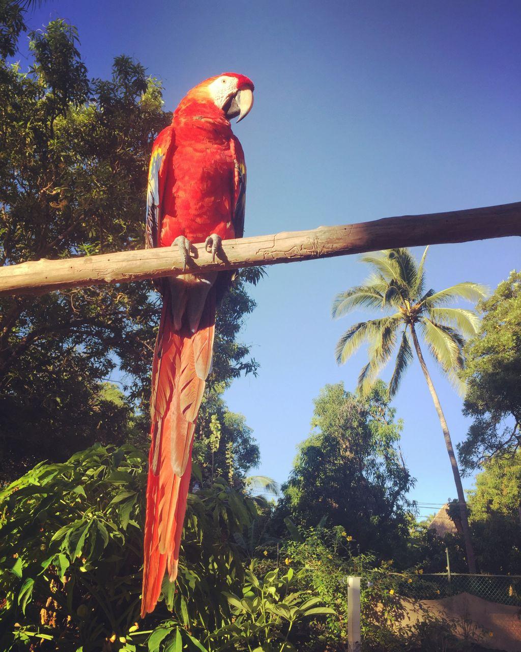 One of the noisy papagayos from Saburo's place