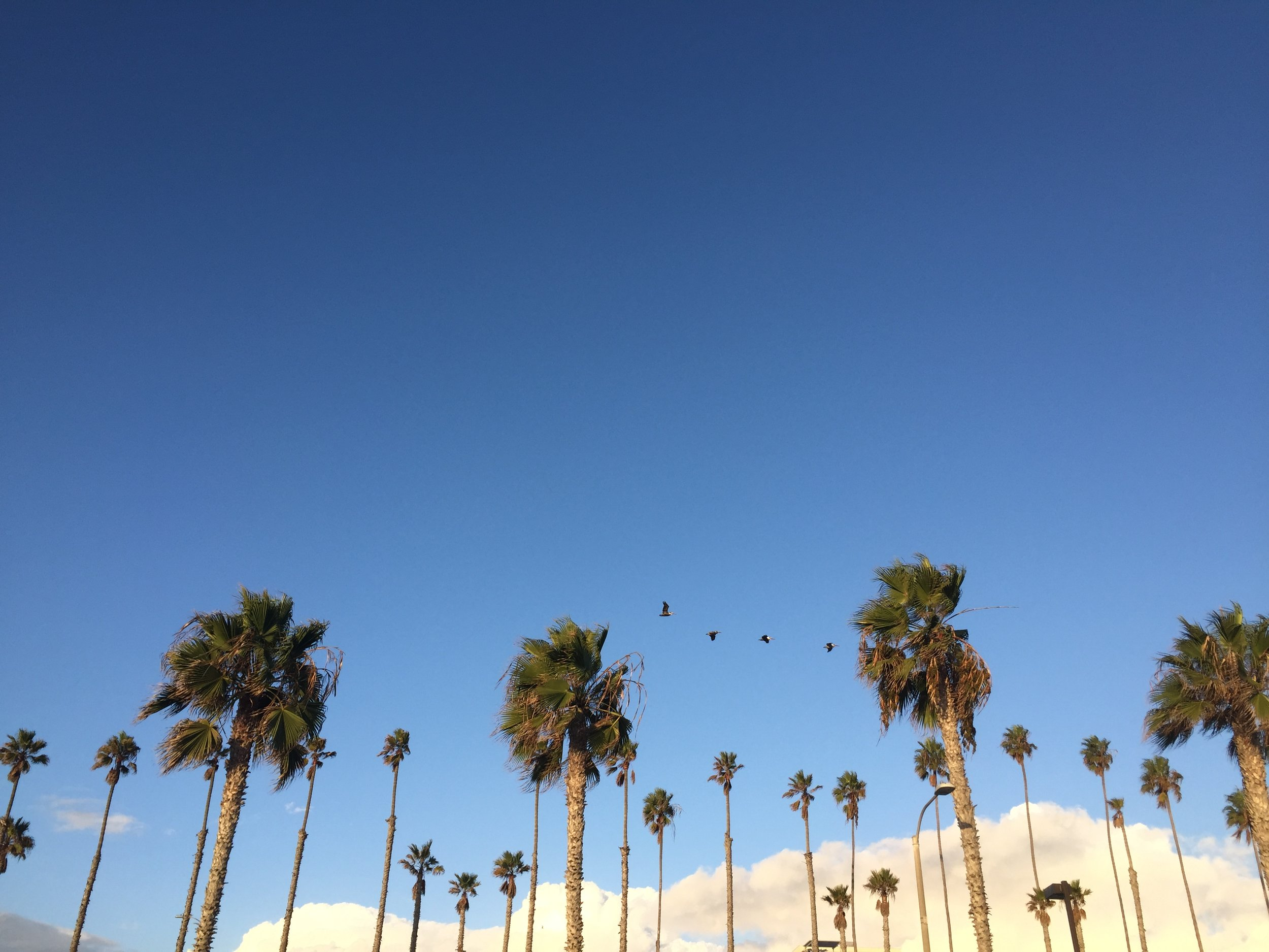 Classic California view