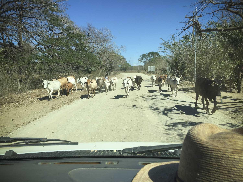 Traffic jam on the way to Popoyo