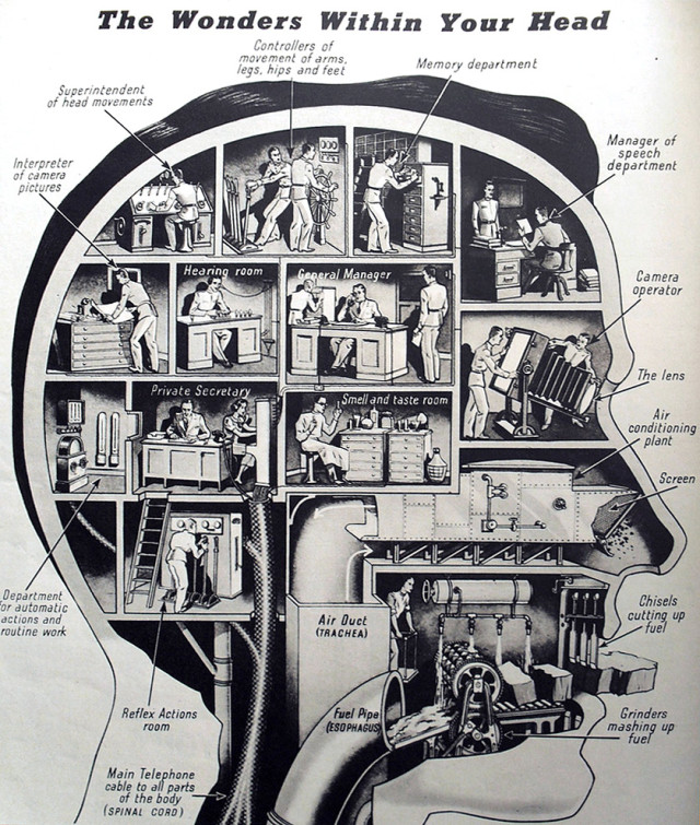 how-your-head-really-works-vintage-infographic-640x755.jpg
