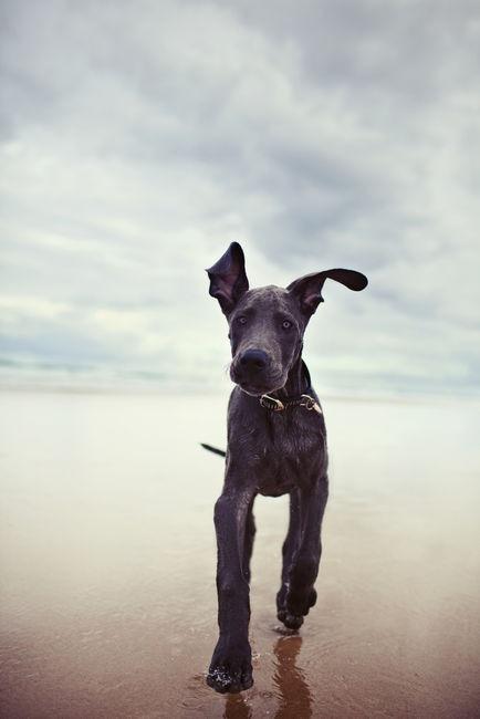 beautiful-dog.jpg