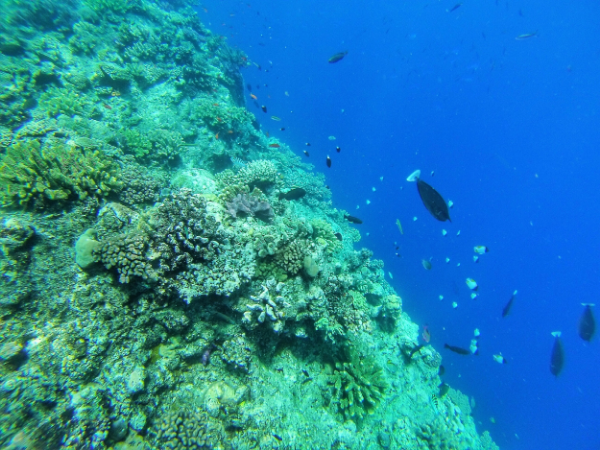 Underwater in Namena Marine Reserve