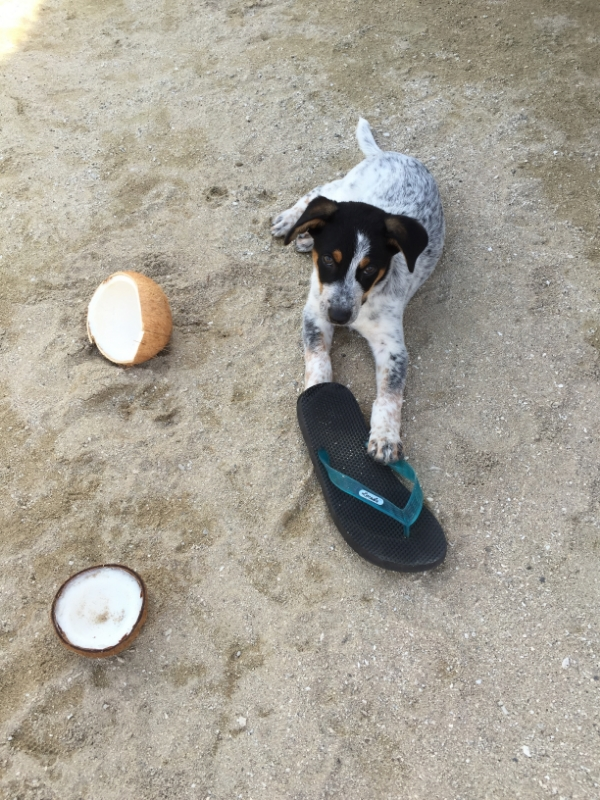 We chew coconuts and shoes