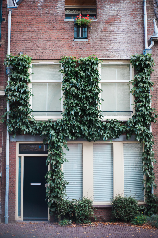amsterdam_ (28 of 67).jpg