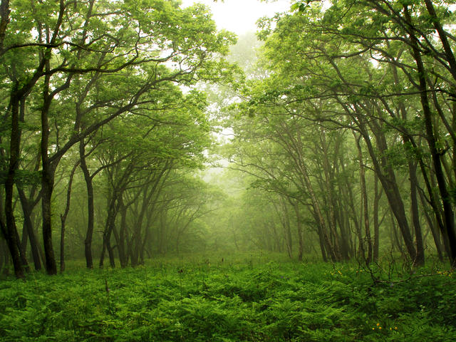 virgin forest - a home to many living things.