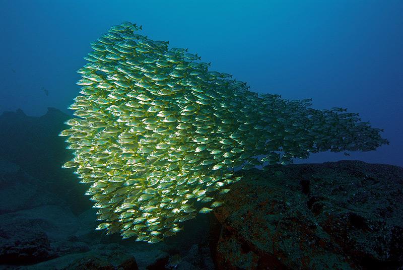 Fish School (Pixdaus).jpg