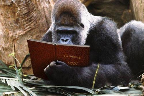 Trust me - the silverback is faking it.