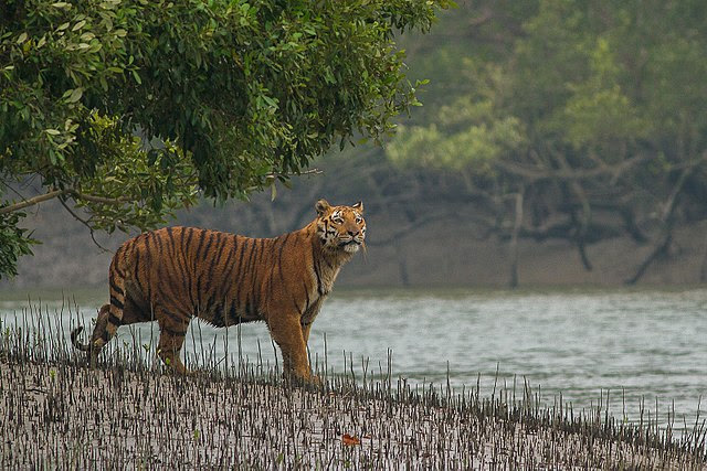 The Tiger needs the forest and the river and the forest and the river need the Tiger.