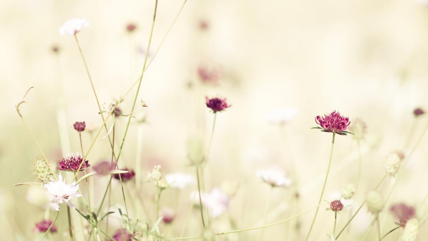 Flower-Wallpaper-Tumblr.jpg