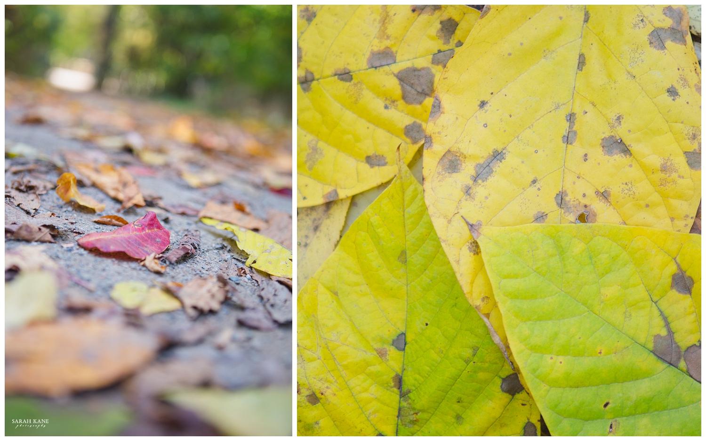 Details - Robious Landing Park -  Sarah Kane Photography 001.JPG