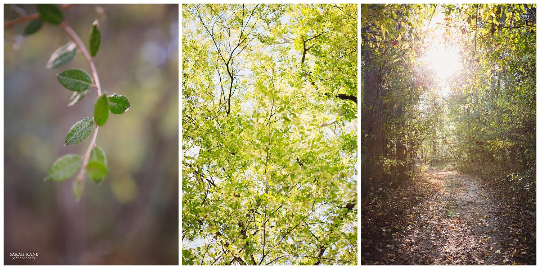 Details - Robious Landing Park -  Sarah Kane Photography 010.JPG