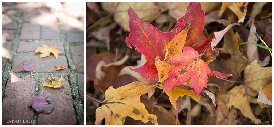 Fall Mini Details  59Sarah Final.jpg