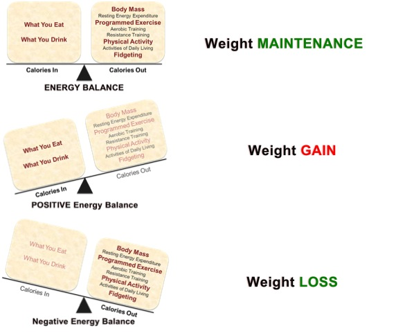 Energy Balance, Positive Energy Balance, Negative Energy Balance