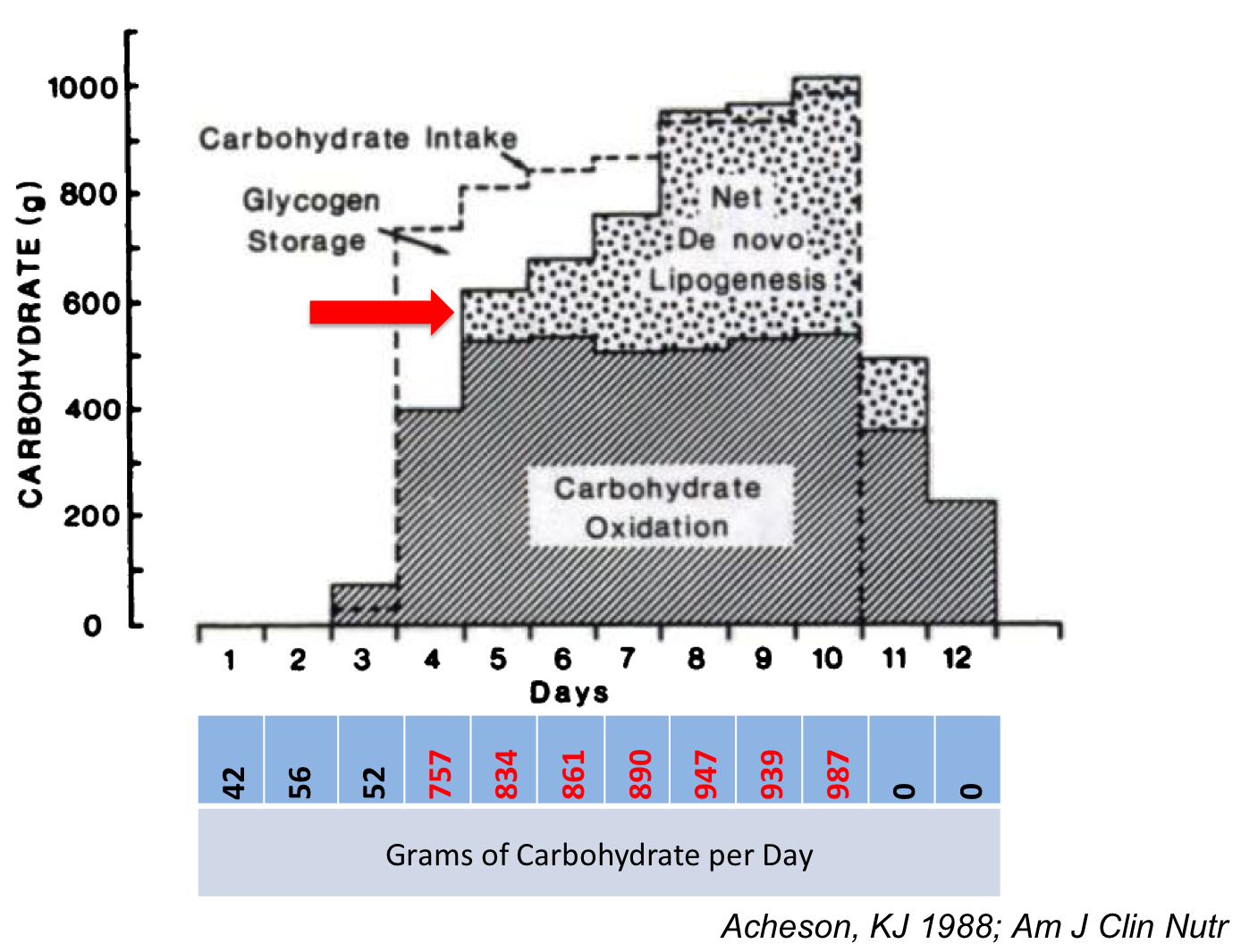 The effect of eating massive amounts of carbohydrate on fat (lipogenesis) and carbohydrate/glycogen storage
