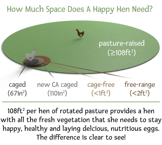 Classification system for caged, cage-free, free-range, and pasture-raised courtesy  Vital Farms .