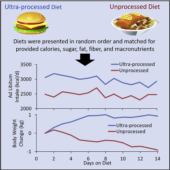 Figure 4:  When Macronutrients are Matched (same ratio of carbs, fats, and proteins) People will Eat Nearly 500 Calories/Day more when Offered Highly Processed compared to Minimally Processed Food.
