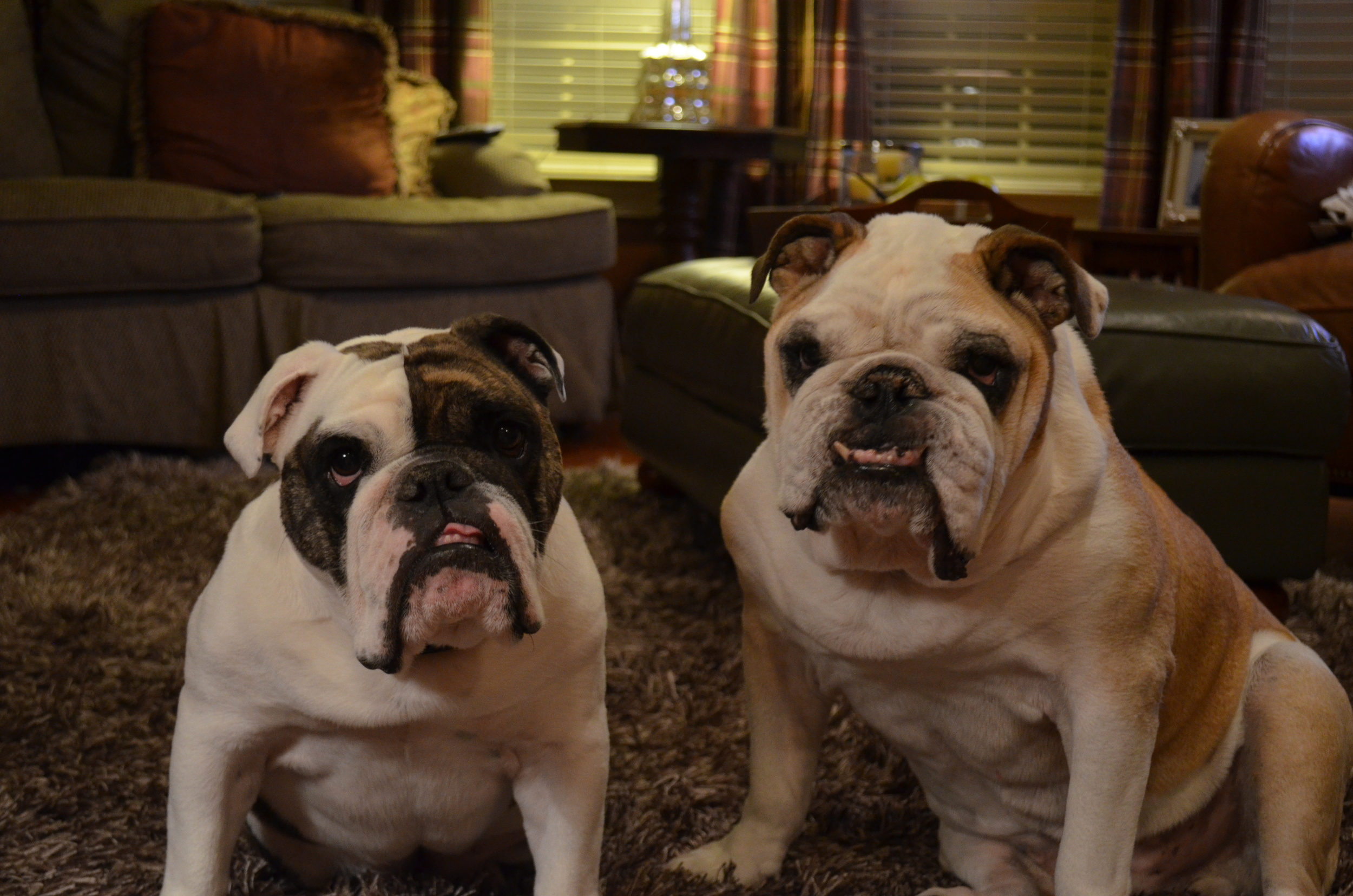 Our sweet bulldogs Roxy and Bruno.....