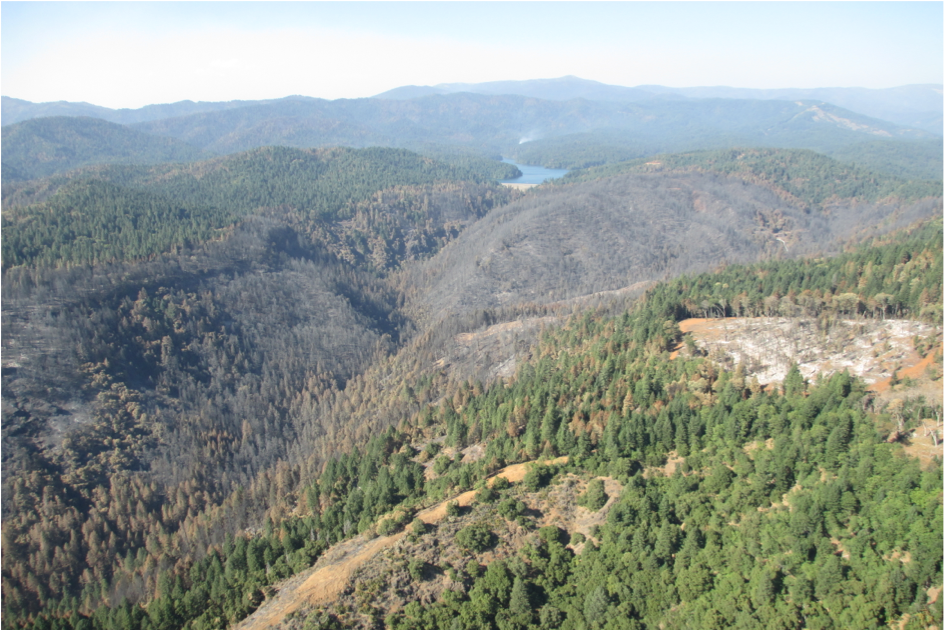 Bagley Fire Area. McCloud Reservoir in background. -U.S.Forest Service photo