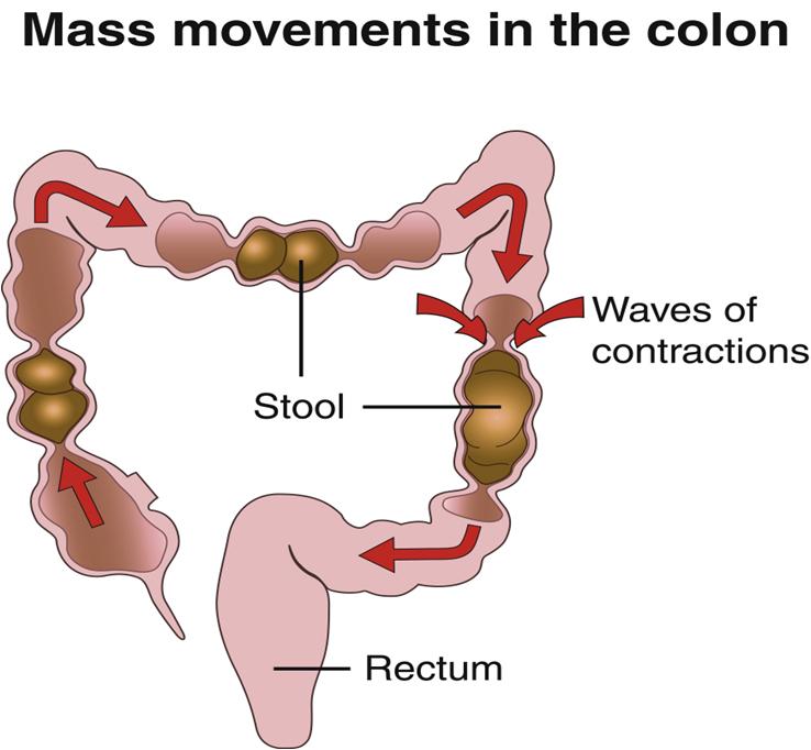 bowel movements.png