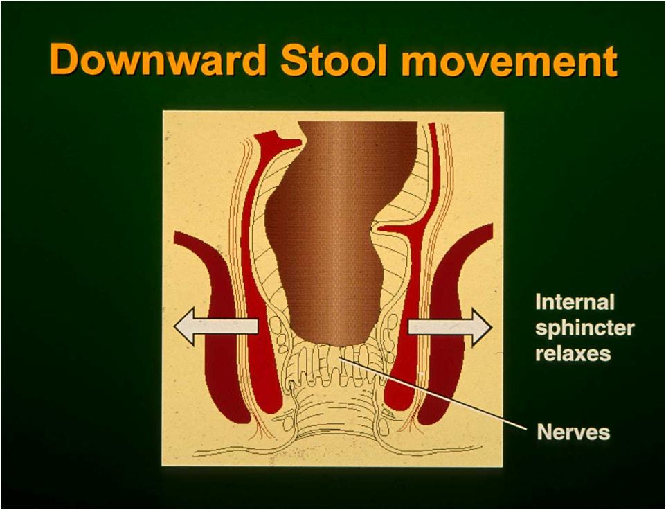 downward stool movement C Norton.png