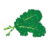 stock-illustration-63920529-two-large-kale-leaves-on-a-white-background.jpg