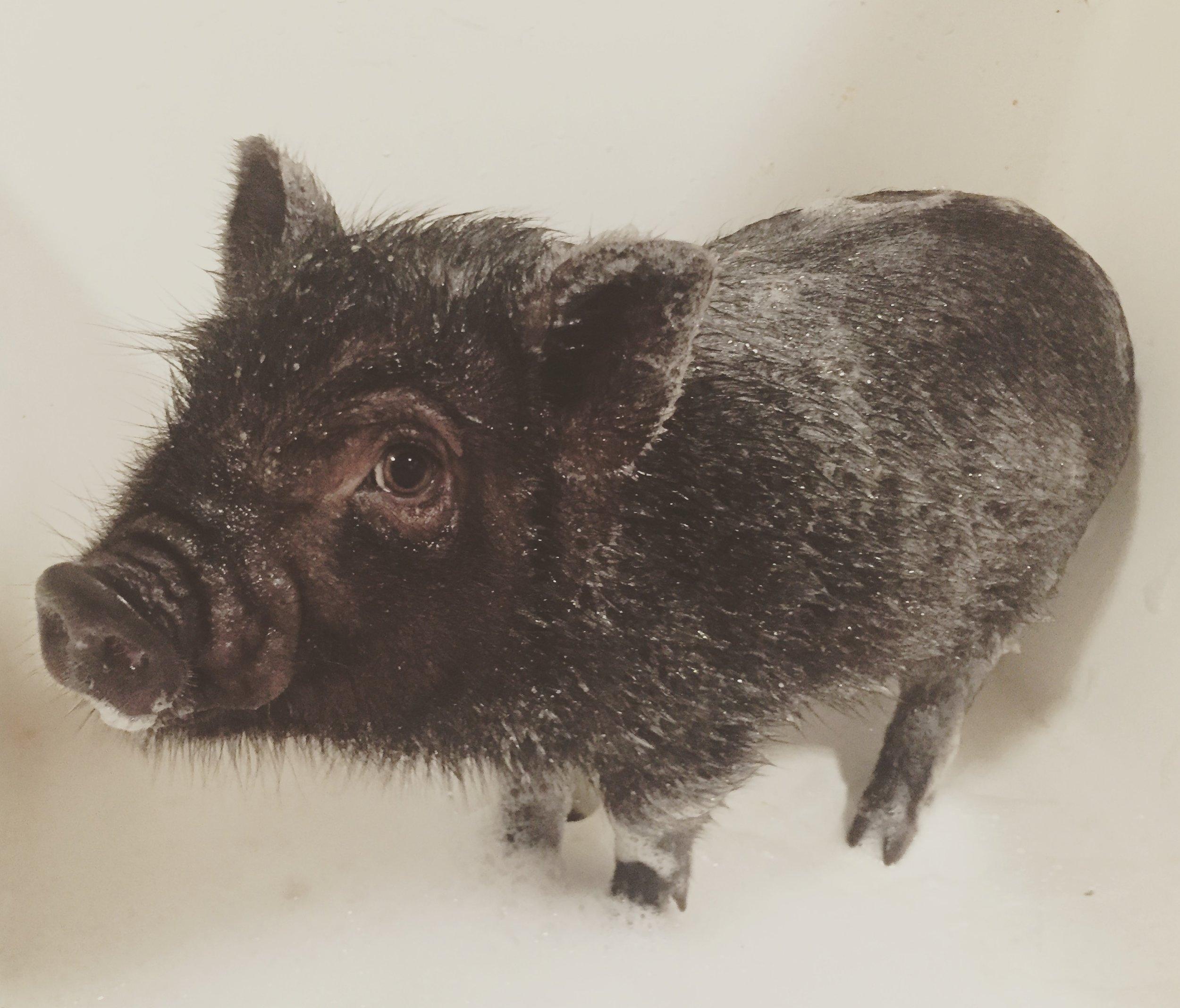 Norman having a bath!