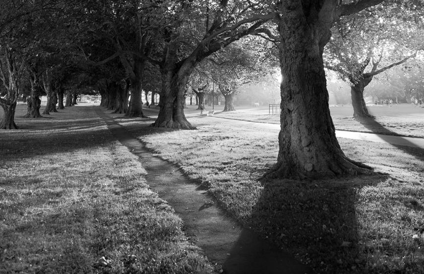 Hagley Park Landlife Images.jpg