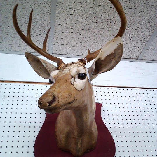 Don't worry, it's a form for a mounted deer, not an actual deer.
