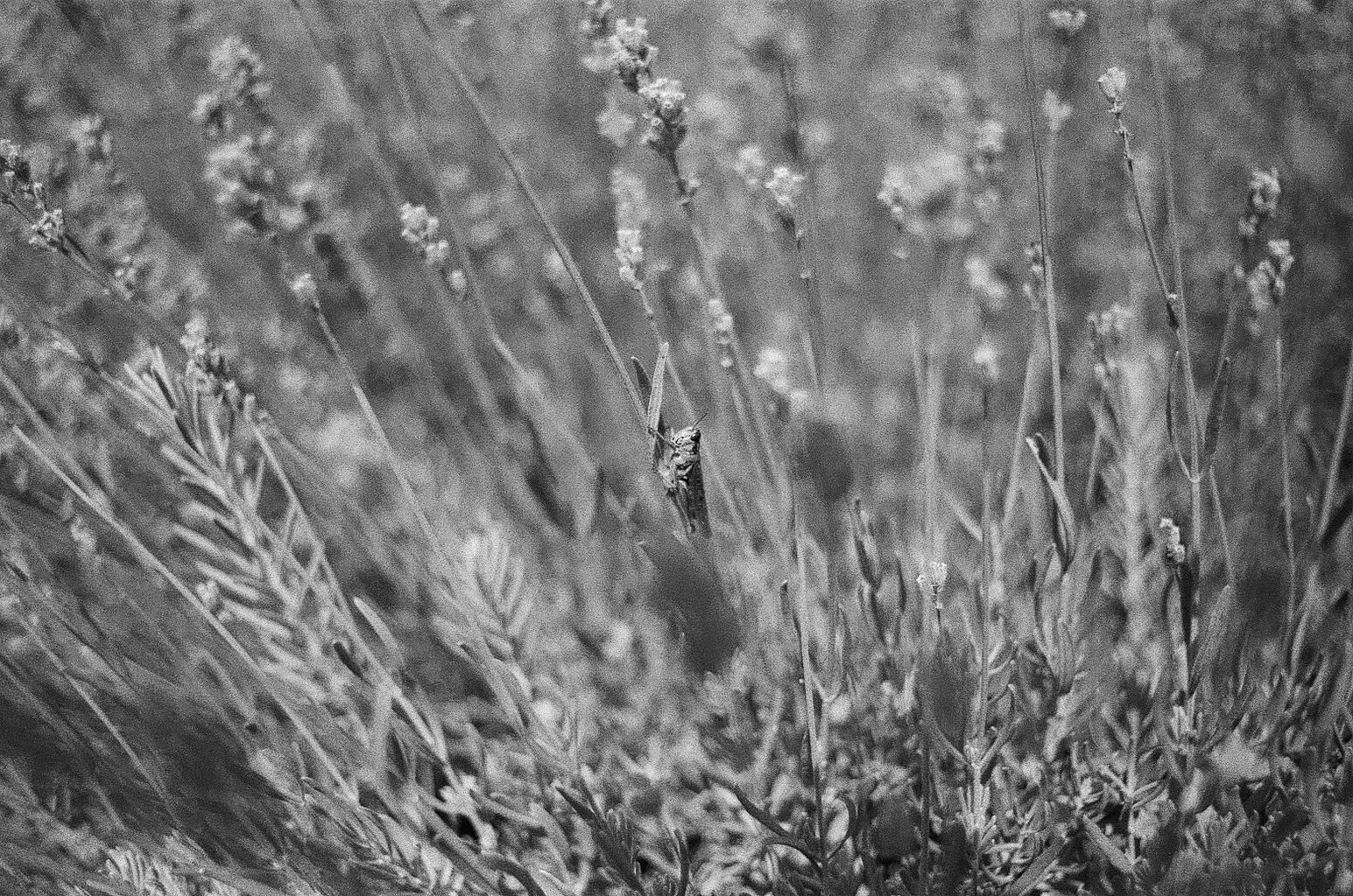 35mm-favorite-26.jpg