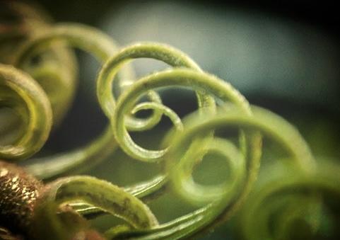 spiral1.jpg