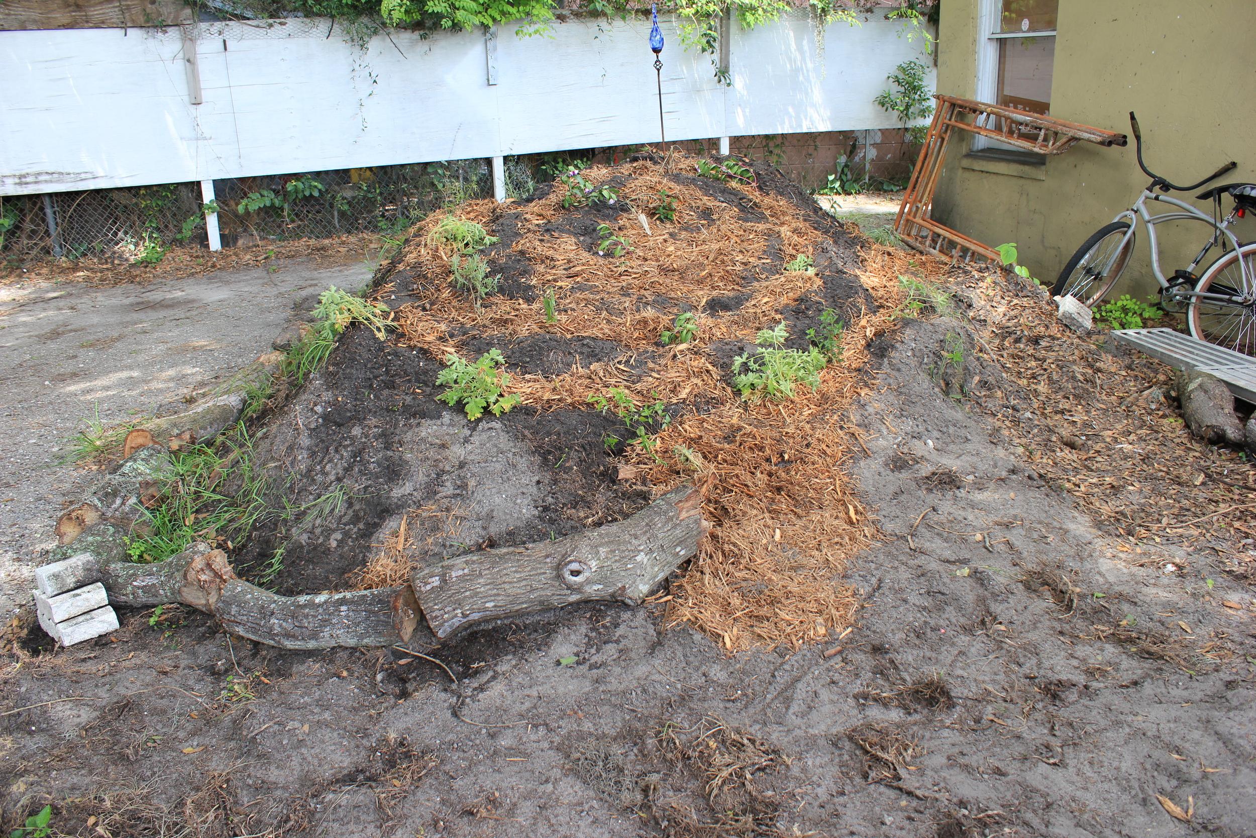 garden_6.JPG