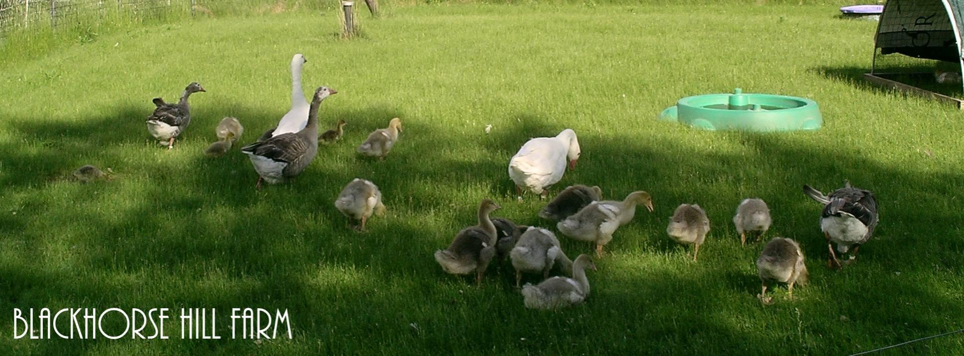 ducks & Geese.jpg