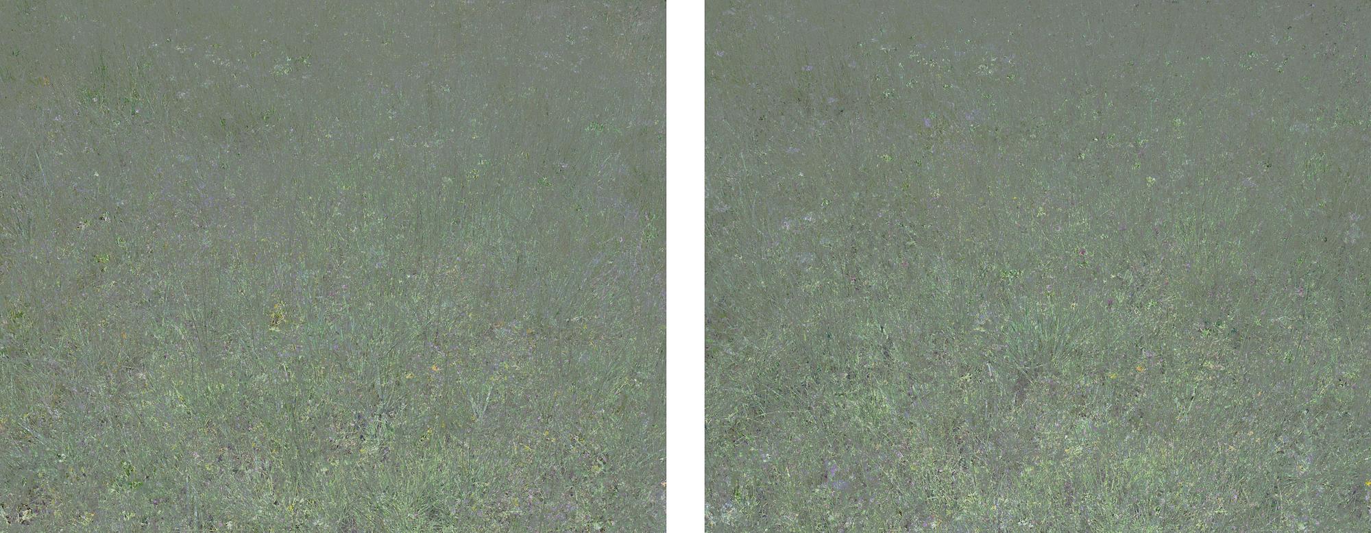 Untitled (Meadow 1) & Untitled (Meadow 2)