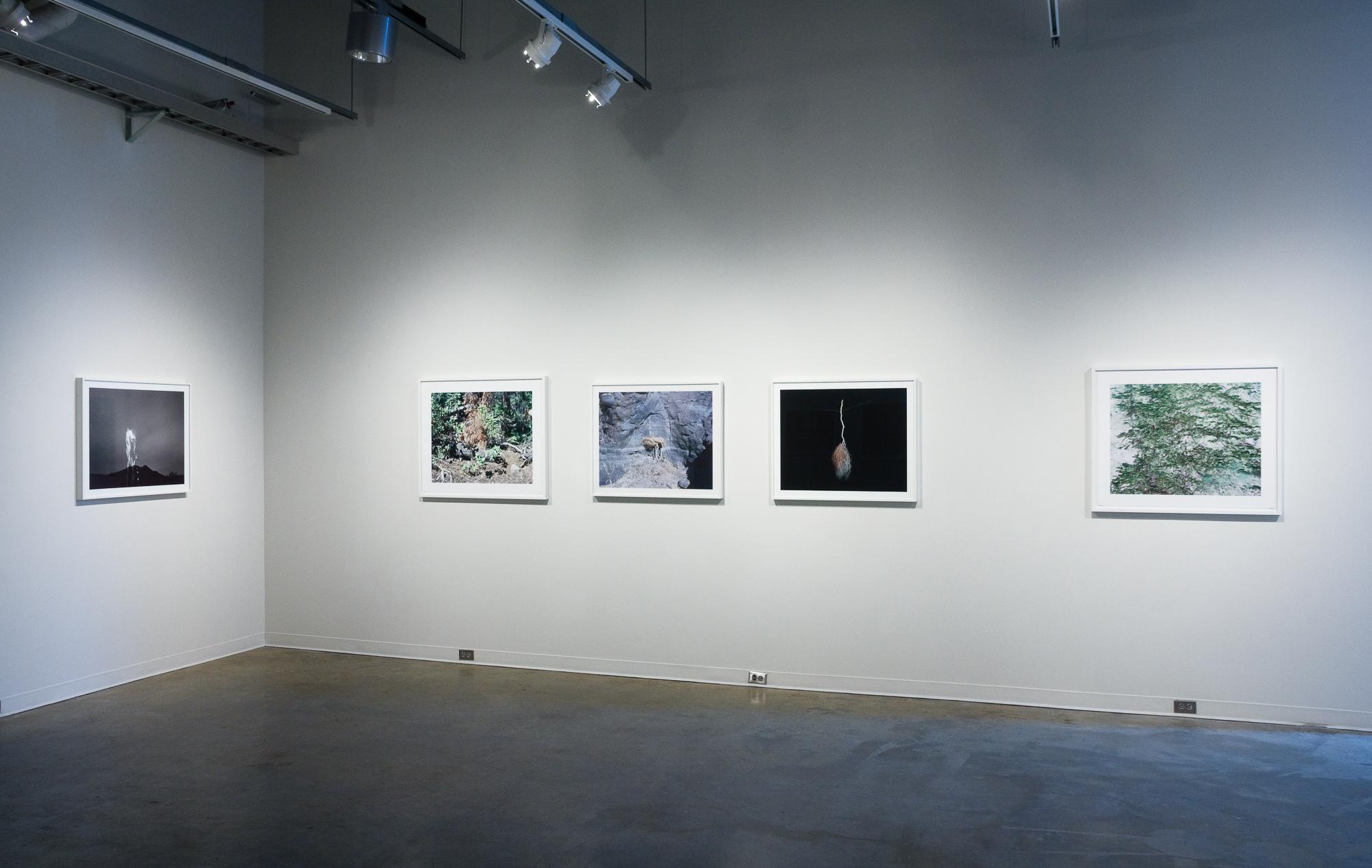 Night of the Moth, ML; Watson, AR; Untitled, ML; Untitled, ML; Untitled, AR
