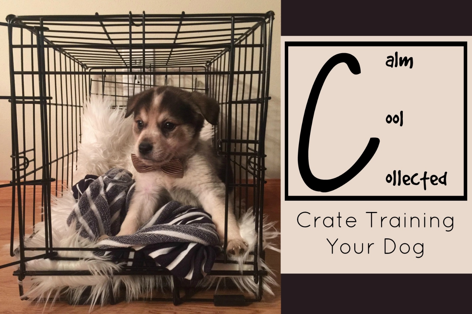 crate_training_title_image.jpg